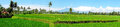 Panorama From Rice Field Landscape On Java Island, Indonesia Royalty Free Stock Photography - 89608707