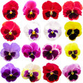 Pansy Set Isolated On White Background. Viola Tricolor Red Blue Yellow Macro Closeup Royalty Free Stock Images - 89671639