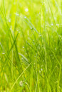 Green Grass With Morning Dew Stock Photo - 89692670