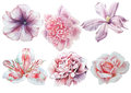 Set With Flowers. Rose. Alstroemeria. Pansies. Peony. Clematis. Watercolor Illustration. Royalty Free Stock Photos - 89716098