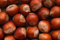 Bright Brown Hazelnuts Background Close Up Royalty Free Stock Photo - 89731285