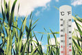 Thermometer At Field Of Green Young Grass Indicating Weather Change Royalty Free Stock Photos - 89732098