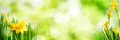 Bright Green Spring Panorama Background Royalty Free Stock Photos - 89746288