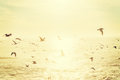 Flock Of Seagulls In San Diego Stock Image - 89797541