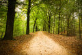 Forest Lane Royalty Free Stock Photo - 89836815