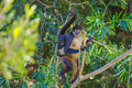 Spider Monkey. Mexico Stock Photo - 89862030