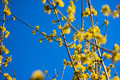Yellow Flowers In Spring. Stock Photo - 89867230