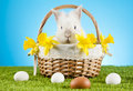 Easter Bunny Royalty Free Stock Photo - 89907495