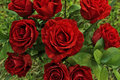 Red Roses Royalty Free Stock Photo - 89929075