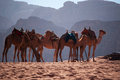 Wadi Rum, Camel, Camels, Dirt Road, The Valley Of The Moon, Jordan, Middle East, Desert, Landscape, Nature, Climate Change Stock Image - 89981091