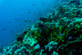 Sea Under Water Nature, With Reaf Coral And Fishes. Sea Flora And Fauna. Stock Photos - 90002893