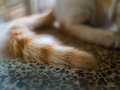 White Golden Stray Cat Tail Stock Photo - 90010730