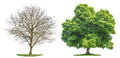 Tree Collection Isolated Spring Summer Silhouette Royalty Free Stock Image - 90028296