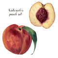Watercolor Peach Set. Hand Painted Food Illustration With Sweet Fruit Isolated On White Background. Botanical Stock Photo - 90071030
