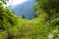 Fresh Green Foliage In The Forest. Stock Photos - 90084773