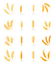 Wheat Isolated On White Background. Royalty Free Stock Photography - 90085737