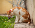 A Cat Eating A Bird It Has Caught. A Bird In Cat`s Mouth Royalty Free Stock Photography - 90109347