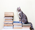 Cat Sitting On The Books Royalty Free Stock Image - 90154876