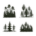 Tree Outdoor Travel Black Silhouette Coniferous Natural Badge, Tops Pine Spruce Branch Cedar And Plant Leaf Abstract Royalty Free Stock Image - 90162496