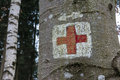 Medical Red Cross Emergency Symbol Painted On Tree Trunk Forest Royalty Free Stock Photography - 90214917