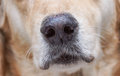 Dog Nose Stock Images - 90254234