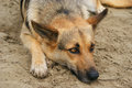 Sad Dog On The Sand Royalty Free Stock Images - 90272119