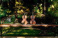 Violin Music Instrument Of Orchestra. Violins In The Park On The Bench Royalty Free Stock Photos - 90278918