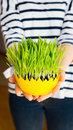 Girl Giving Green Oat Sprouts For Easter Stock Photography - 90326942