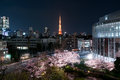 Night View Of Massive Cherry Blossoming With Tokyo Tower, Japan Royalty Free Stock Photo - 90370225