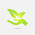 Ecological Icon. Human Hand Growing Green Leaves. Stock Photography - 90377182