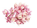 Flower Head Of Cymbidium Stock Photography - 90390872