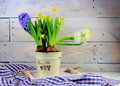 Hyacinths And Daffodils In Ceramic Pots Royalty Free Stock Photography - 90400317