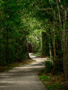 Winding Path Through The Woods Stock Photo - 90403510
