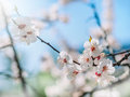 Watercolor Background. Blooming Tree Branches With White Flowers, Blue Sky. White Sharp And Defocused Flowers Blooming Tree Royalty Free Stock Images - 90433149