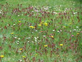 Spring Meadow Stock Photography - 90435192