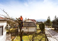 Lumberjack With Chainsaw And Harness Pruning A Tree. Royalty Free Stock Image - 90443666