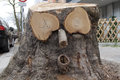 Fun Face Of Old Wood On A Tree Stump Stock Image - 90475001