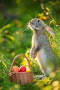 Easter Bunny With A Basket Of Eggs On Spring Flowers Background. Stock Image - 90488571