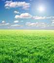 Field Of Green Grass And Stormy Sky Stock Photos - 9058843