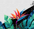 Abstract Tropical Summer Design In Minimal Style. Royalty Free Stock Image - 90563766