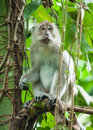 Monkey In The Rain Forest Of Khao Sok Sanctuary, Thailand Stock Images - 90587434