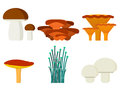 Mushrooms For Cook Food And Poisonous Nature Meal Vegetarian Healthy Autumn Edible And Fungus Organic Vegetable Raw Royalty Free Stock Photos - 90689138