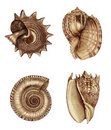 Shell Assortment 1 Stock Images - 9079714