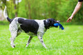 Mixed Breed Dog With A Toy In The Snout Royalty Free Stock Photos - 90763088