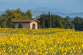 House In Field Of Sunflowers Royalty Free Stock Photography - 90766767