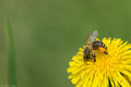 Spring Pollination Stock Images - 90817844