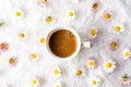 Cup Of Coffee And Daisy Flowers Royalty Free Stock Images - 90834759