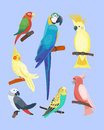 Cartoon Tropical Parrot Wild Animal Bird Vector Illustration Wildlife Feather Zoo Color Nature Vivid. Stock Images - 90837604