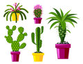 Cactus Flat Style Nature Desert Flower Green Cartoon Drawing Graphic Mexican Succulent And Tropical Plant Garden Art Stock Photos - 90852353