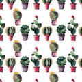 Cute Mexican Hawaii Tropical Green Floral Summer Spring Pattern Of A Colorful Cactus In Pots With Flowers Vertical Pattern Stock Images - 90862314